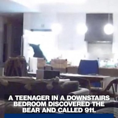 911 call captures couple battling bears that broke into