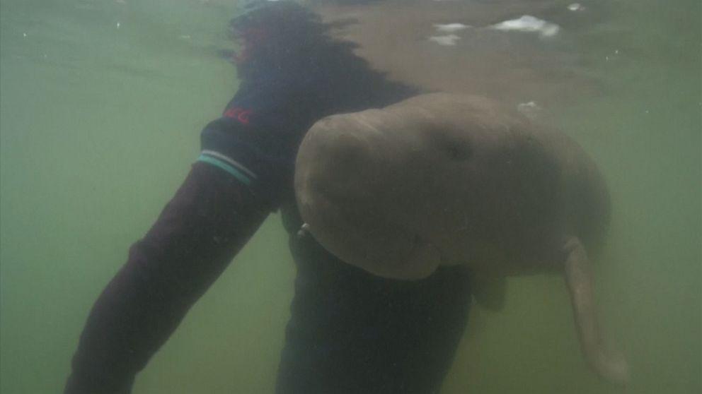 Marium the viral Dugong dies after ingesting plastic