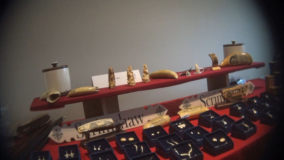 Undocumented elephant ivory trade 'thriving' in Massachusetts: Humane Society
