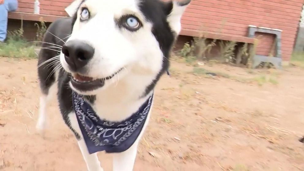 Dog who wandered 700 miles from home found safe in New Mexico