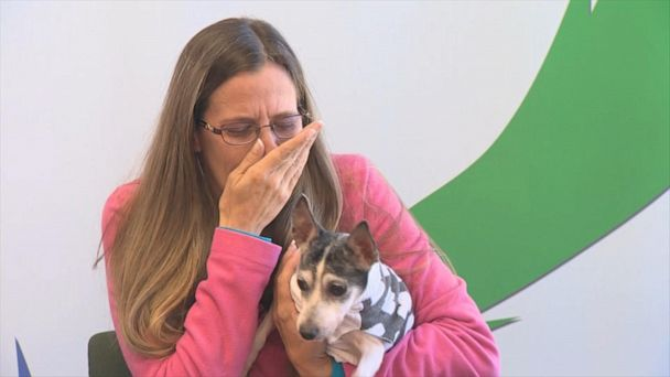 Dog missing since 2007 reunites with her owner