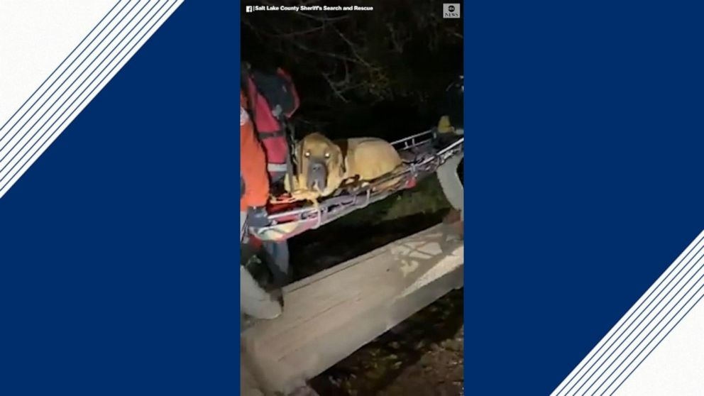 Officials rescue 190-pound dog from hiking trail