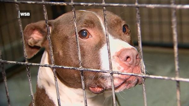 Dog lover plans to open one-of-a-kind sanctuary for pit bulls