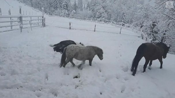 Foal experiences snow for the first time