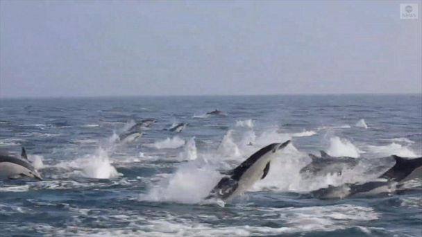 Dolphins spotted near Newport Beach