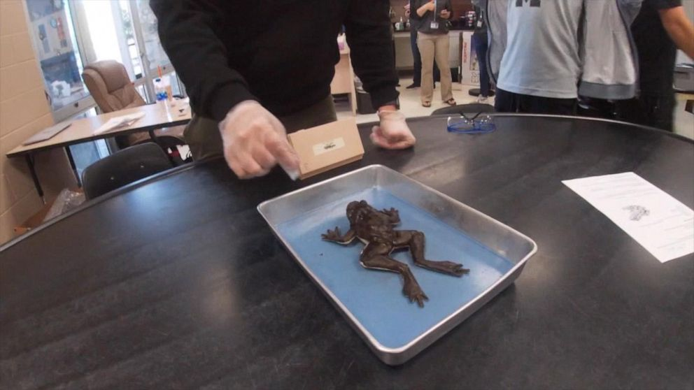 High school unveils synthetic frogs for dissection in biology class