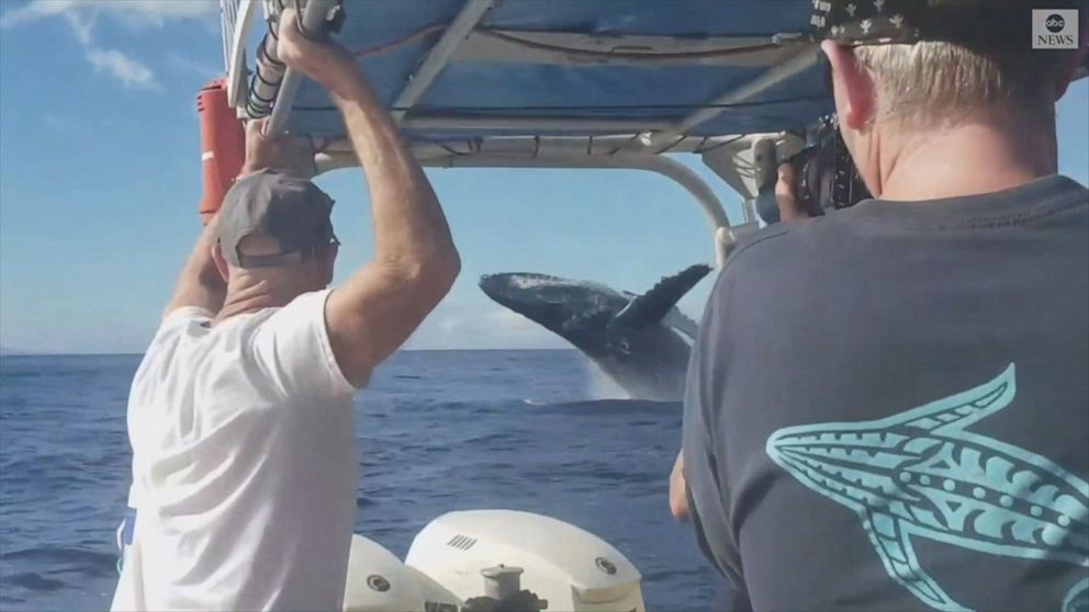 Tourist filming rainbow almost misses humpback whale breach
