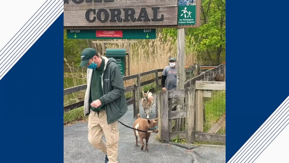 2 goats explore empty Maryland zoo