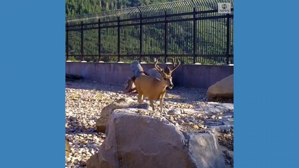 Wildlife overpass helps animals safely migrate