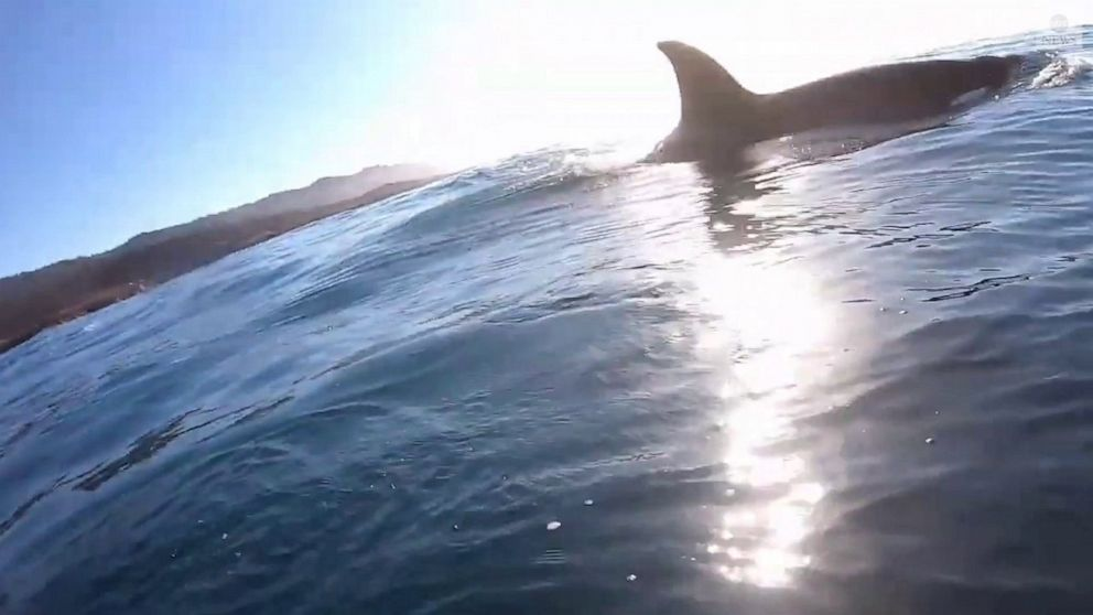 California man captures incredible meeting with orcas