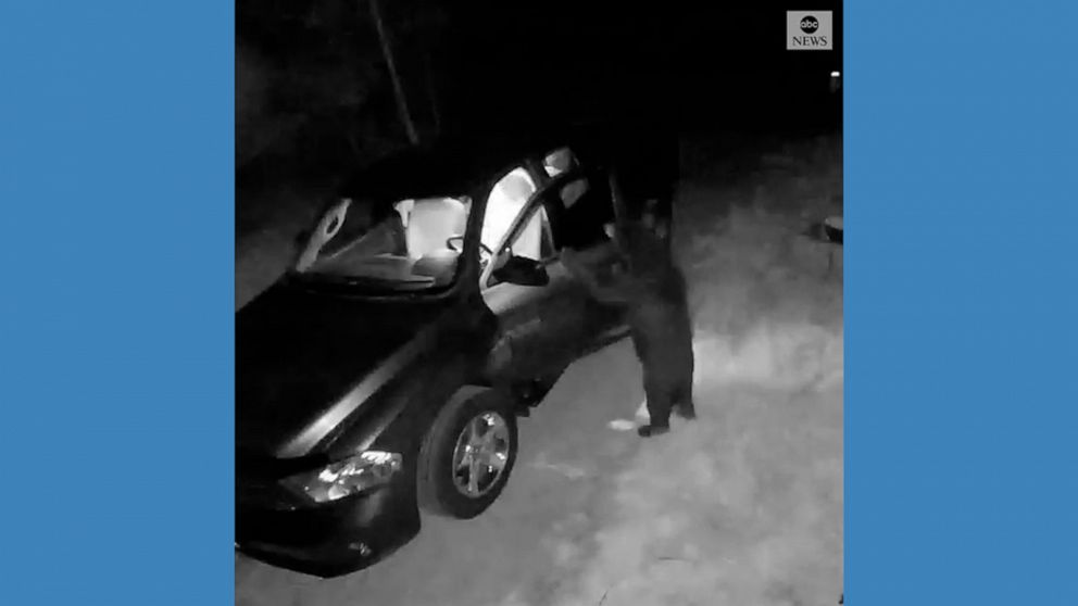 Bear breaks into parked vehicle in New Hampshire