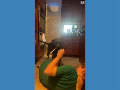 WATCH:  Prank fails as dog grabs knife instead of helping owner