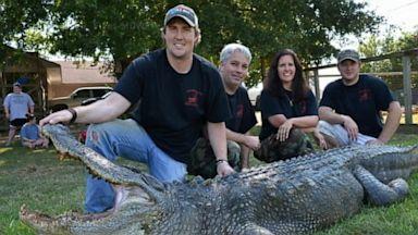 PHOTO: A 741-pound alligator sets a new record.