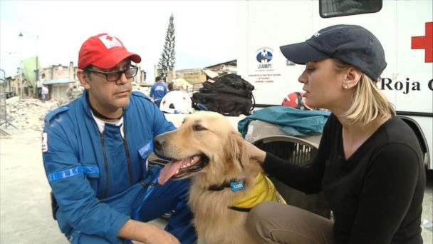 Service Dogs Assist in Rescue Efforts After Ecuador Earthquake