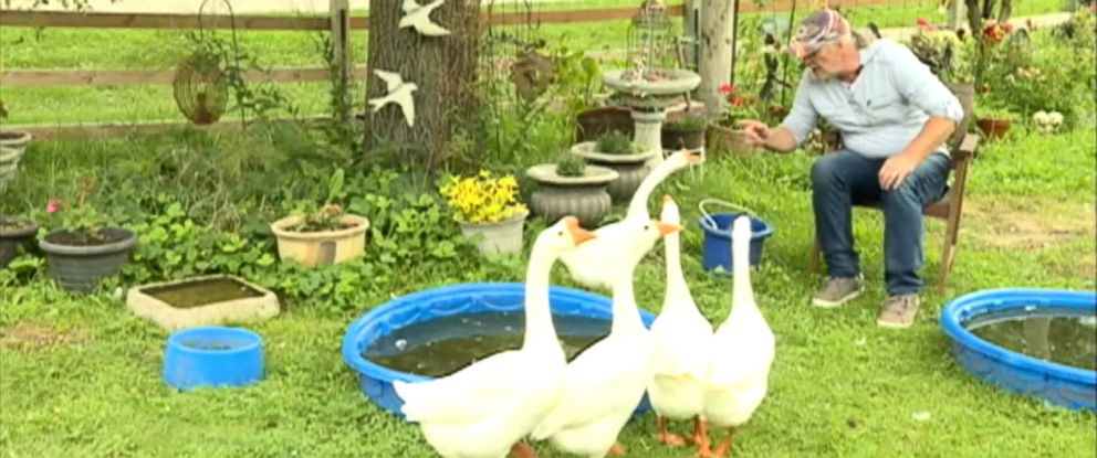 """PHOTO: Robert Sparks is fighting to keep his pet therapy geese named after characters in """"I Love Lucy"""" after receiving a notice saying that they violated an ordinance in the town of Beloit in Wisconsin."""