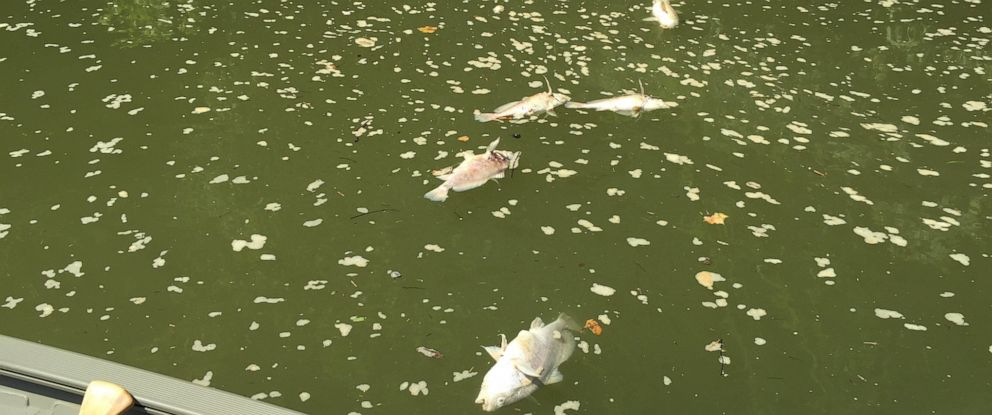 PHOTO: Thousands of dead fish littered the Kentucky River on Sunday, July 7, 2019, after a massive fire.