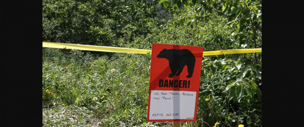 PHOTO: Anchorage police said the same brown bear appears to be responsible for attacks on the missing man, Michael Soltis, and the volunteer searcher, whose name was not released.