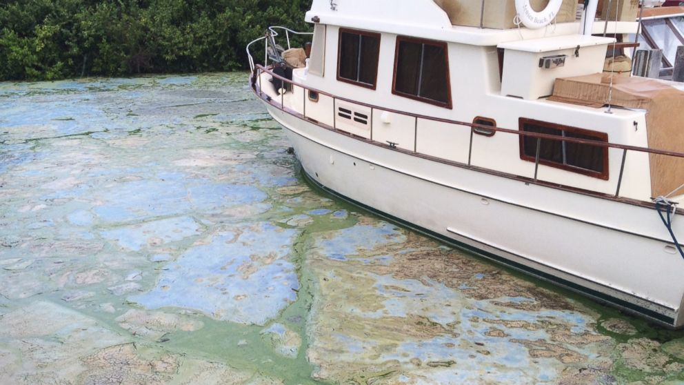 Algae covered water at Stuart's Central Marine boat docks is thick on June 30, 2016, in Stuart, Fla. Officials want federal action along a stretch of Florida's Atlantic coast where the governor has declared a state of emergency over algae blooms.