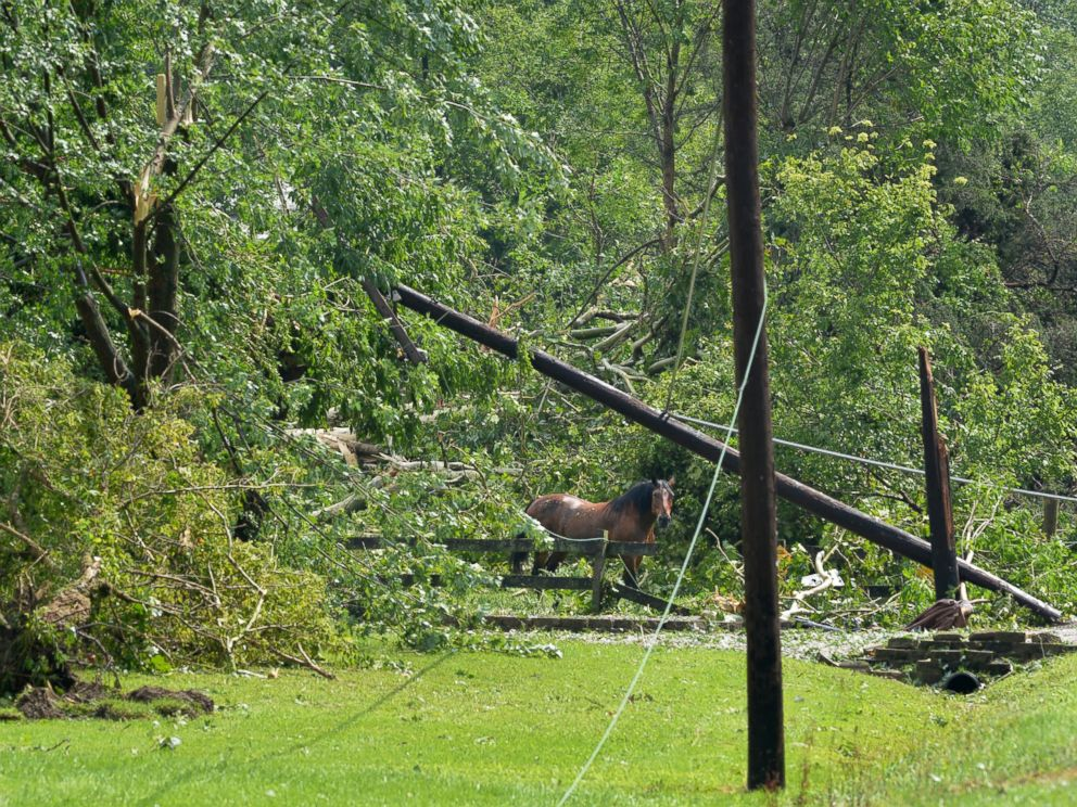 PHOTO: In this photo provided by Frank Oliver, a horse roams following a tornado south of Mace, Ind., Wednesday August 24, 2016.