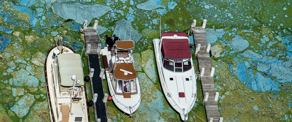 PHOTO: Boats docked at Central Marine in Stuart, Florida, are surrounded by blue green algae, June 29, 2016.