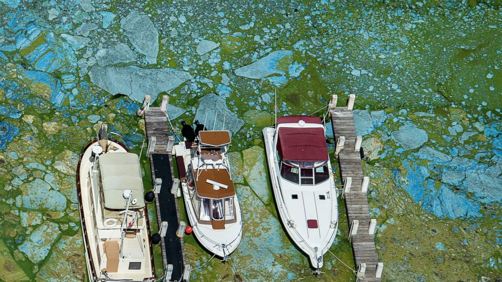 Boats docked at Central Marine in Stuart, Fla., are surrounded by blue green algae, June 29, 2016. Officials want federal action along the stretch of Florida's Atlantic coast where the governor has declared a state of emergency over algae blooms.