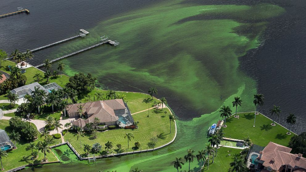 An aerial photo shows blue-green algae enveloping an area along the St. Lucie River in Stuart, Fla., June 29, 2016.