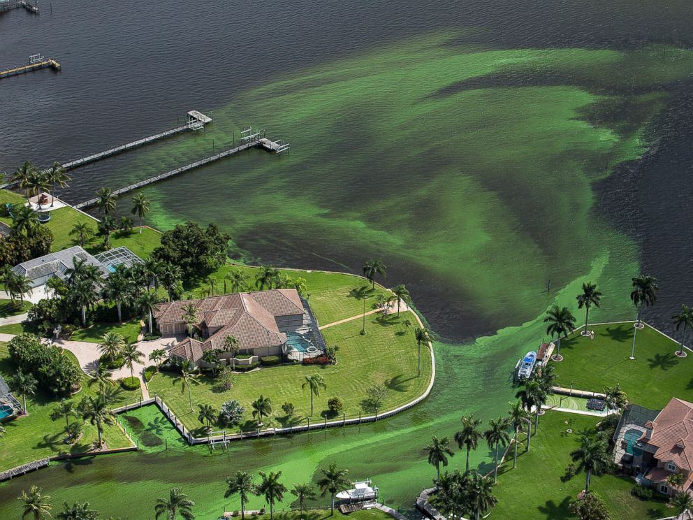 PHOTO: An aerial photo shows blue-green algae enveloping an area along the St. Lucie River in Stuart, Fla., June 29, 2016.
