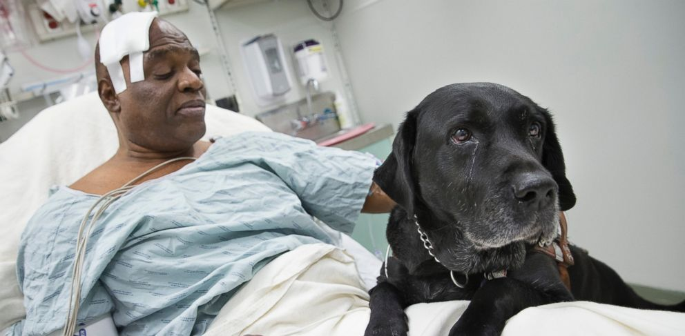 PHOTO: Cecil Williams pets his guide dog Orlando in his hospital bed following a fall onto subway tracks from the platform at 145th Street, Dec. 17, 2013, in New York.