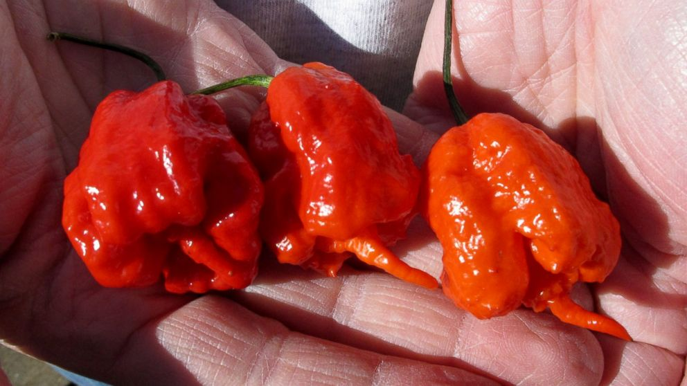A man holds three Carolina Reaper peppers, in Fort Mill, S.C.