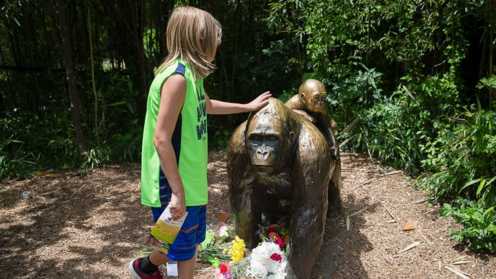 A child touches the head of a gorilla statue where flowers have been placed outside the Gorilla World exhibit at the Cincinnati Zoo & Botanical Garden, May 29, 2016, in Cincinnati.