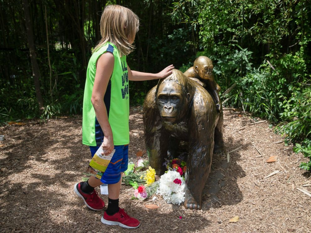 PHOTO: A child touches the head of a gorilla statue where flowers have been placed outside the Gorilla World exhibit at the Cincinnati Zoo & Botanical Garden, May 29, 2016, in Cincinnati.