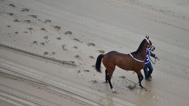 Preakness Day: 2 Horses Die, Jockey Injured in First Few Races