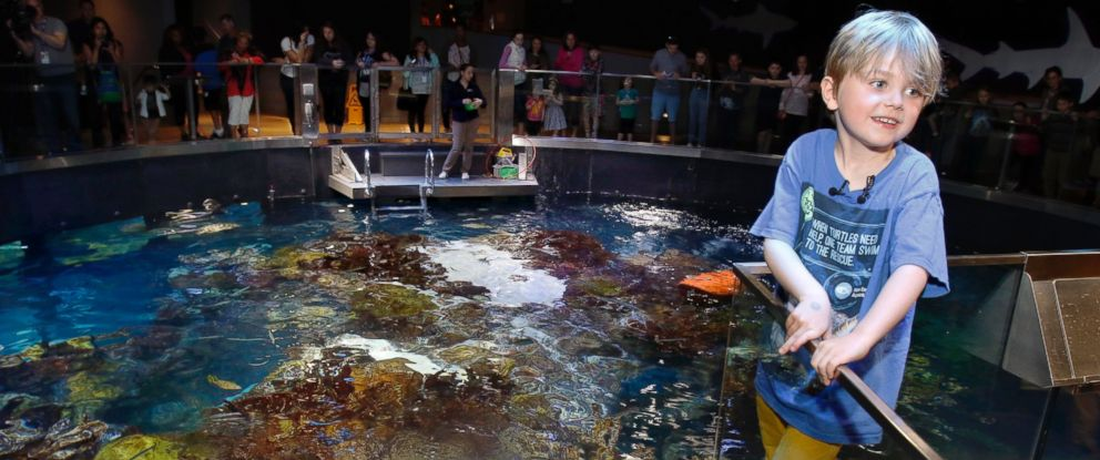 PHOTO: Jasper Rose, of Watertown, Mass., stands near Myrtle, a green sea turtle swimming in the main tank at the New England Aquarium, April 22, 2016, in Boston.