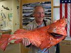 PHOTO: Record Rockfish Caught