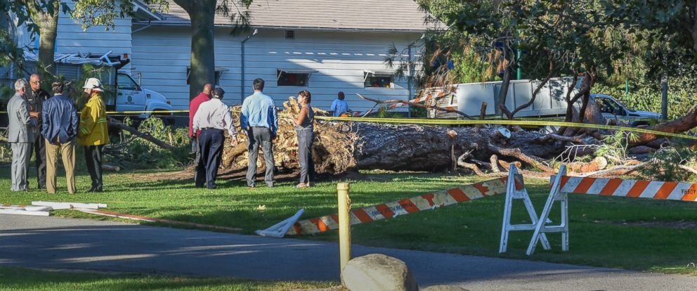 PHOTO: Officials stand by a tree that fell near the Kidspace Childrens Museum in Pasadena, Calif., Tuesday, July 28, 2015. Witnesses say the tree came down on children just as a summer day camp at the museum was letting out for the day.