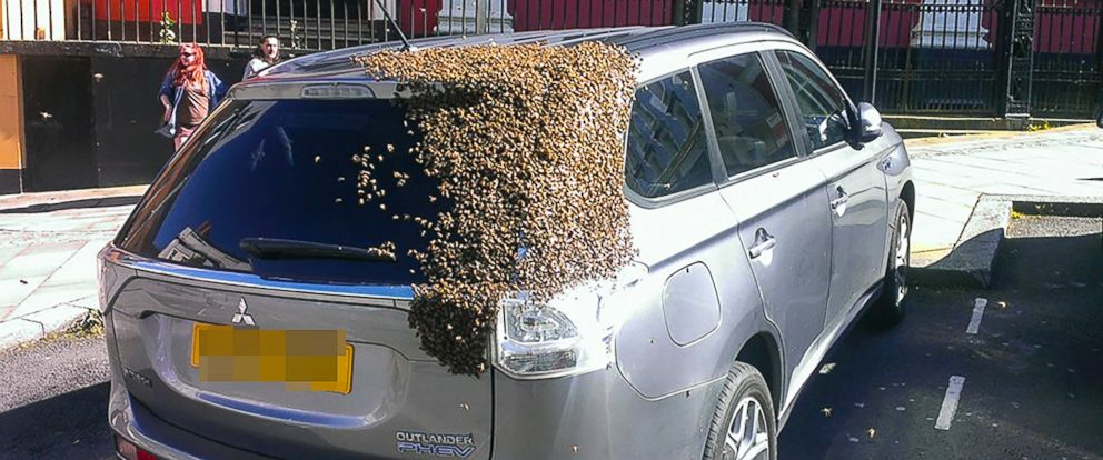 PHOTO: A lost swarm of bees sparked chaos when their queen got stuck in a car, resulting in 20,000 bees chasing the car.