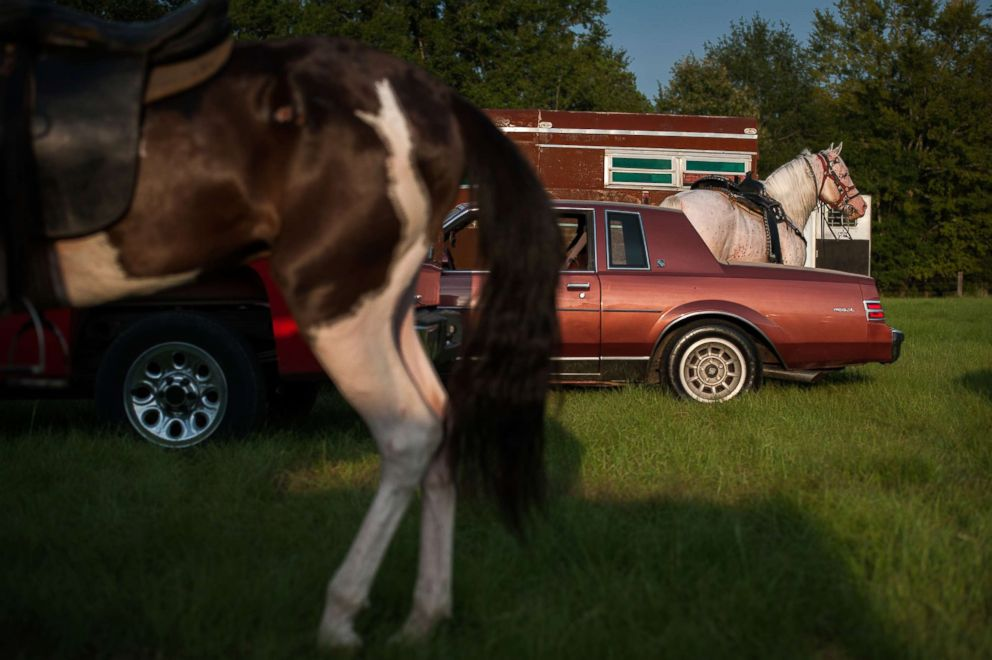 Horses wait in a makeshift parking lot before a sunset horse show at Smith Farm in Charleston, Miss.