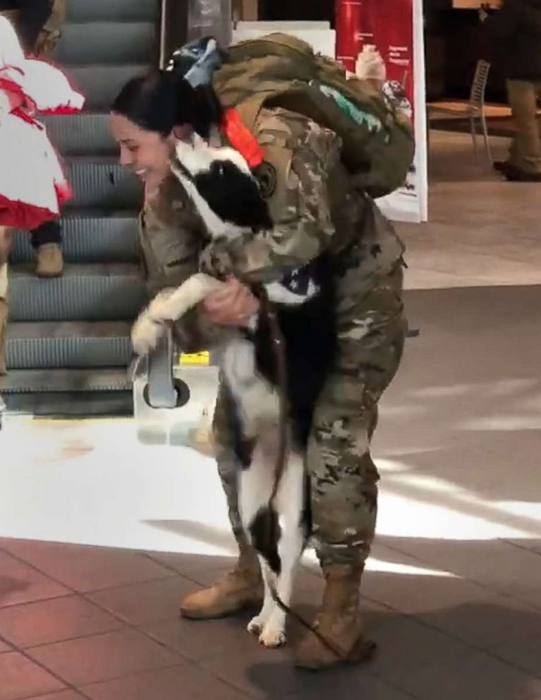 PHOTO: Cassandra Cabrera is greeted by her dog, Miss May at the airport upon her return from a deployment that separated them when Missy May was still a puppy.