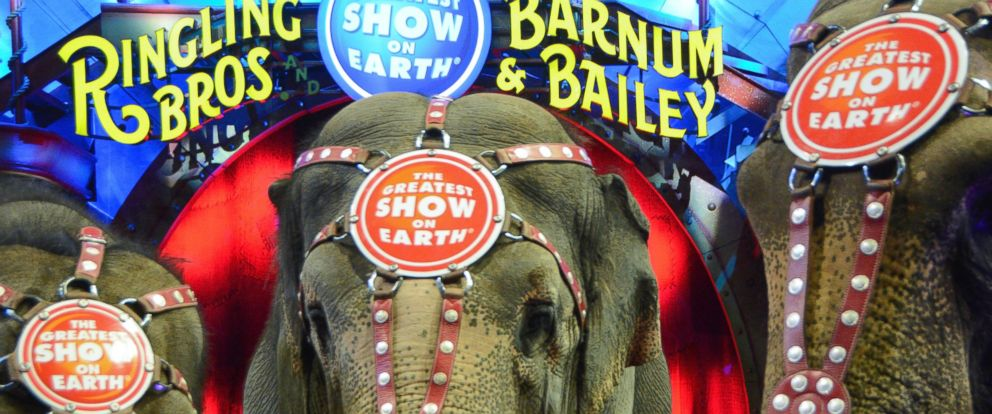 PHOTO: General view of elephants and atmosphere at Ringling Bros. and Barnum & Baileys Circus XTREME VIP celebrity red carpet premiere at Staples Center on July 13, 2015 in Los Angeles.