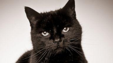 PHOTO: Black cat.