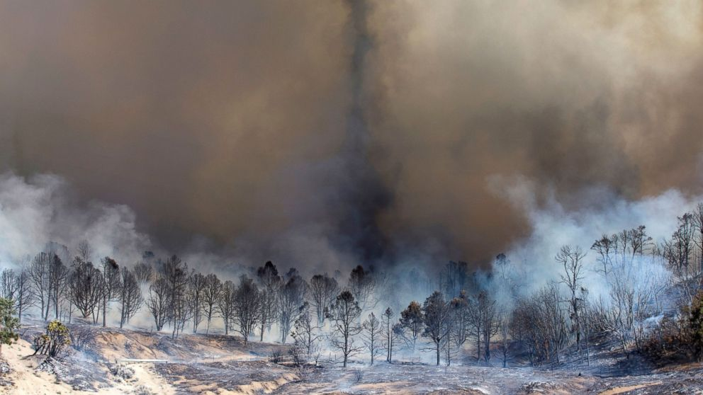 Smoke rises from a burned out grove of trees at the Blue Cut wildfire in Wrightwood, California, on Aug. 17, 2016.