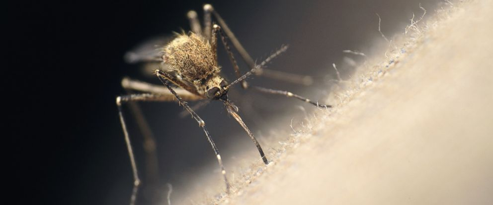 PHOTO: Orkin released its Top 20 list of US cities with the worst case of mosquitoes.