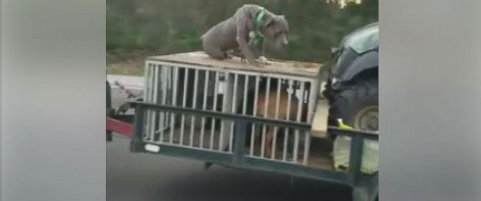 PHOTO: Palm Coast resident Brenna Cronin, 24, filmed a dog chained to the top of a crate towed by an SUV driving at least 70 mph.