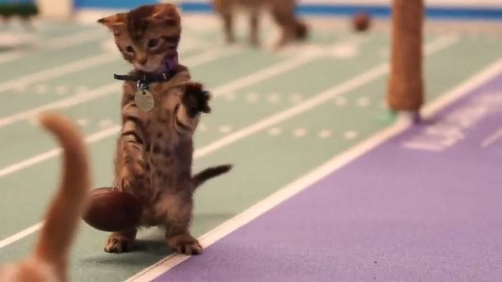 Kitten Bowl IV is full of the cutest and cuddliest surprises in sports from the Hallmark channel.