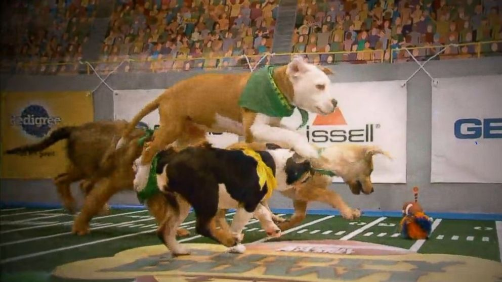 Puppy Bowl XIII Preview: Countdown to Game Day from Animal Planet.