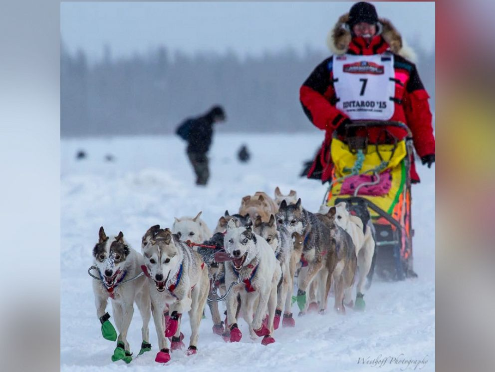 An overview of the idatarod a dog sled race across alaska