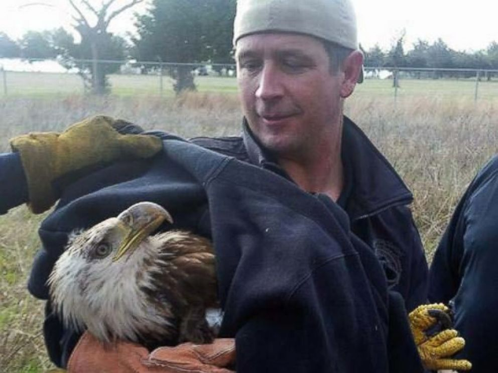PHOTO: Members of the Sedgwick County Sheriffs Office, Sedgwick County Fire Department and Eagle Valley Raptor Center rescued an injured bald eagle near a lake west of Wichita, Kan.