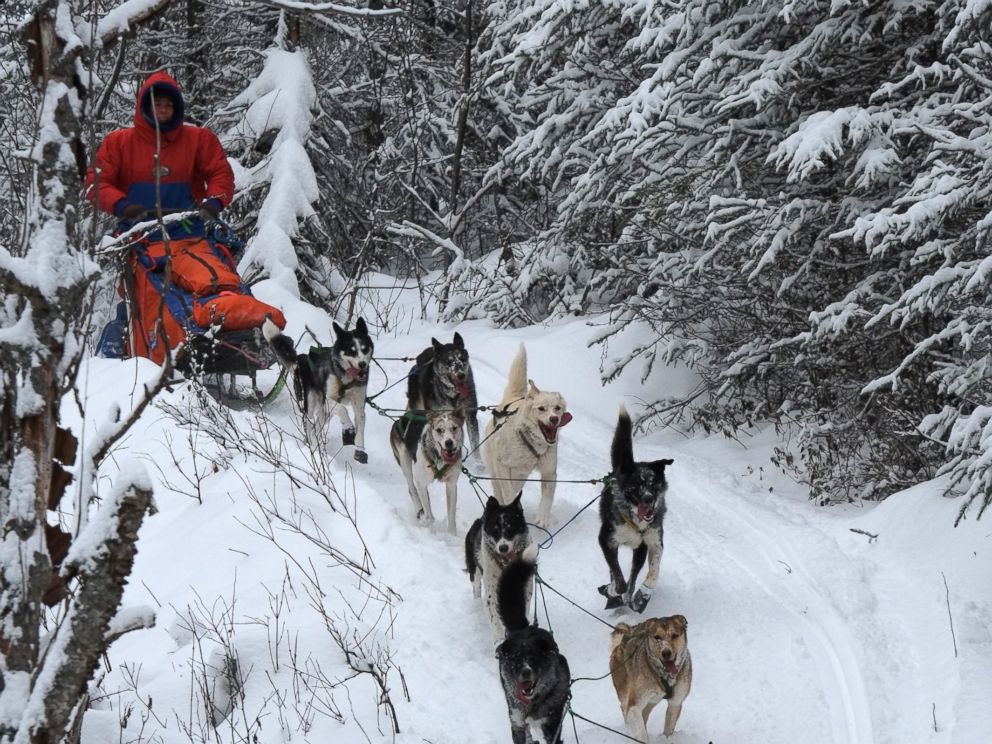 Why these 2 mushers brave ice snow and freezing temps to compete in photo cindy abbott with her dogs in 2015 started training to become a publicscrutiny Choice Image