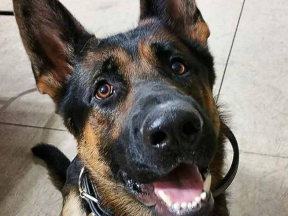 PHOTO: Jethro, a K-9 for the Canton Police Department in Ohio, passed away in January of 2016 after being shot multiple times after responding to a burglary at a local grocery store, according to police.