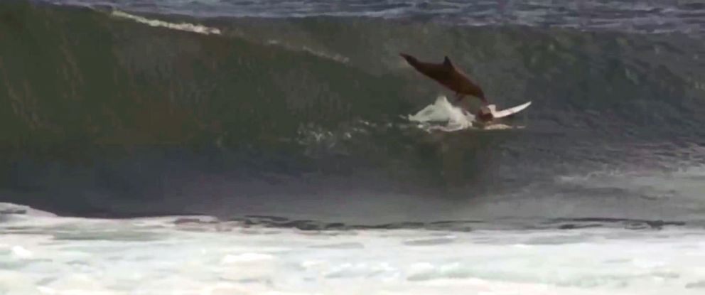 PHOTO: A dolphin is seen jumping out of the water and landing on young Australian surfer Jed Gradisen.